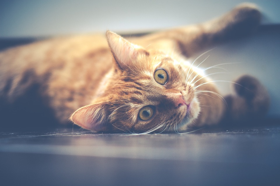 Grundausstatung für Katzen: Alles rund um das Zubehör für Katzen.