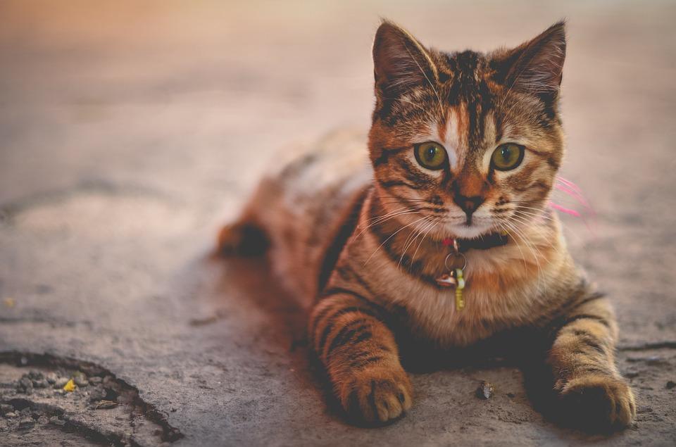 Von Katzenliebhaber für Katzen.