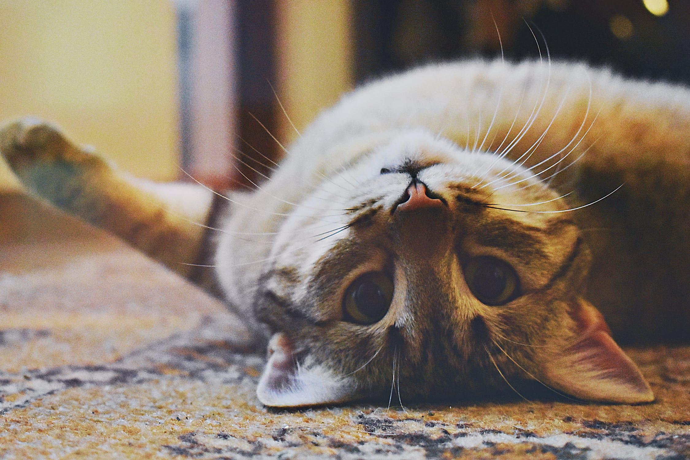 Nur das Beste Nassfutter für Ihre Katze.