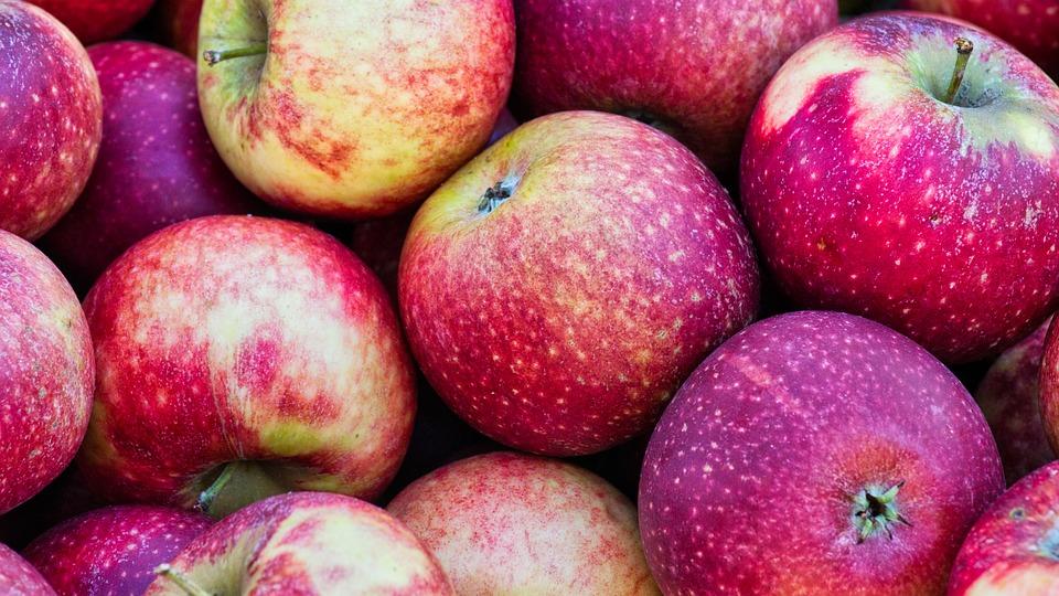 Äpfel schnell ernten mit einem Apfelsammler.
