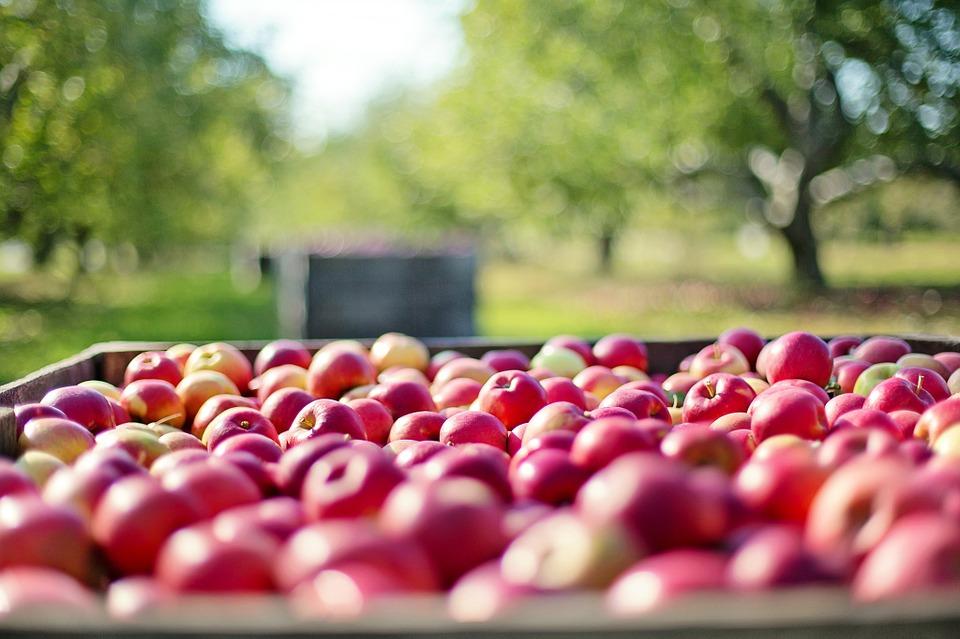 Den besten Apfelsammler kaufen.